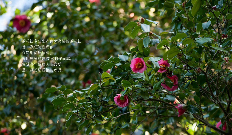 茶花油专业生产商大岛椿的茶花油是一款植物性精油,仅使用优质原料,采用独家精制技术制作而成。